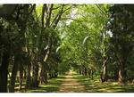Path in Garden, Berkeley Plantation, Charles City, Virginia