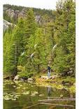 Ducks, Nymph Lake, Rocky Mountain National Park, Estes Park, Colorado