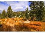 Pole Creek Trail, Bridger Wilderness, Wind River Range, Pinedale, Wyoming