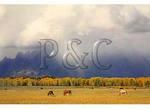 Storm Over the Tetons, Grand Teton National Park, Wyoming