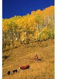 Cowboy and Dogs, Ohio Creek Pass, Gunnison, Colorado