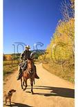 Cowboy and Dogs, Ohio Creek Pass Road, Gunnison, Colorado