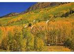 Camper, Kebler Pass, Crested Butte, Colorado