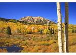 Aspen Trunks and East Beckwith Mountain, Kebler Pass, Crested Butte, Colorado