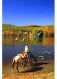 Horses Drinking at Bass Lake, Moses Cone Mansion, Moses Cone Memorial Park, Blue Ridge Parkway, North Carolina