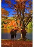 Horses at Bass Lake, Moses Cone Mansion, Moses Cone Memorial Park, Blue Ridge Parkway, North Carolina