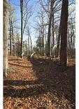 Breastworks at Cold Harbor Battlefield, Richmond National Battlefield Park, Virginia