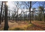 Breastworks at Cold Harbor Battlefield, Richmond National Battlefield Park