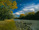 Autumn Cottonwoods, Animas River, New Mexico