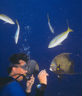 Scuba Diver feeding French Angel fish