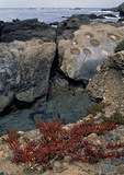 Ice Plants and Sculptured Sandstone