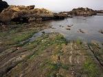 Sandstone Shoreline, Point Lobos State Reserve