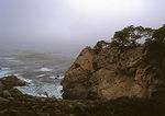 Cliff Face, Monterey Cypress
