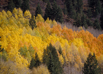 Autumn, San Juan Mountains