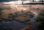Wetlands, Grand Teton National Park