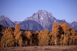 Autumn, Mt. Moran, Grand Teton National Park