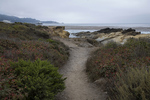Pathway to The Slot, Point Lobos State Reserve, California