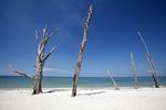 Driftwood, Lover's Key Beach
