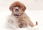 """Golden Retriever Puppy Playing in the Snow"""