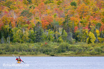Sea kayaker on Lake Manganese duriing peak fall colors near Copper Harbor Michigan model released