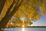 Sunrise through autmn tinged oak tree over Black Dog Lake at the Minnesota Valley NWR near Minneapolis Minnesota