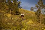 Ely Wilkinson rides singletrack on the Sundance Trail near Polson Montana model released