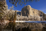 El Capitan reflects into the Merced River in winter in Yosemite National Park, California, USA