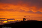 Lone tree silhouetted against brilliant sunset clouds at Theodore Roosevelt National Park, North Dakota, USA