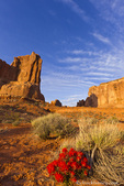 Desert paintbrush livens up the landscape near Courthouse Towers in Arches National Park, Utah, USA