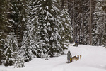 Dog sledding at Dog Sled Adventures Montana in Olney, Montana, USA