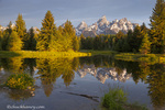 Teton Mountain reflect in backwater of Snake River at Scwabacher Landing in Grand Teton National Park, Wyoming, USA