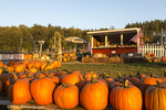 Pumpkin stand along Highway 22 in Empire, Michigan, USA