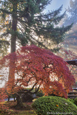 Japanese Gardens in autumn in Portland, Oregon, USA