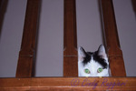 Cat peeking through the railing