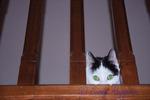 Cat peeking through the railing