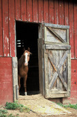 This horse was looking out of the barn, as if trying to decide if he really wanted to venture out or not!