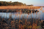 Blackwater National Wildlife Refuge, Cambridge Maryland