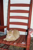 Cat on a front porch rocker