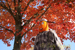 Pumpkin Man under Autumn Colors