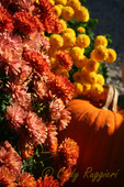 Autumn colors, pumpkin and mums