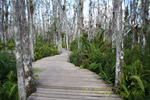 Cypress Swamp Boardwalk, Loxahatchee National Wildlife Refuge, Florida