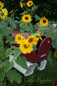 Flowers surround this rural mailbox
