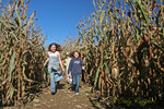Children running through a corn maze