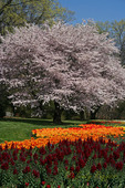 Spring colors, Longwood Gardens, Kennett Square Pennsylvania