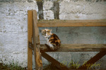 Forlorn looking barn cat