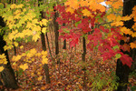 Autumn leaves and groundcover