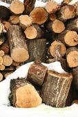 Snow covered log pile