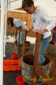 Grape stomping, Cobblestone Winery, west side of Cayuga Lake, Finger Lakes region, NY