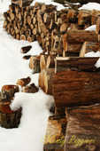 Wood pile and snow