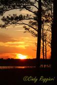 Blackwater National Wildlife Refuge, Maryland